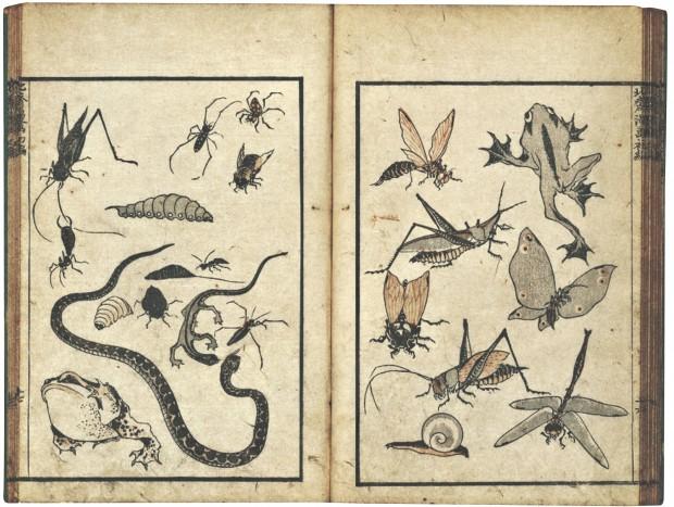 DMA-U0015218L_insects_amphibians