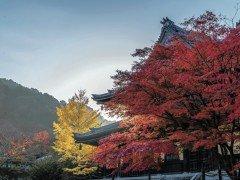 叡山電鉄周辺で京都の庭をめぐる、2泊3日の旅【後半】