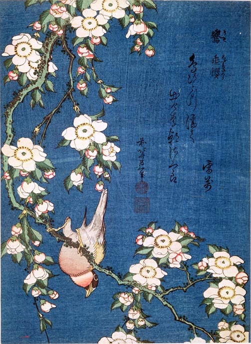 BL7129 Bullfinch on a branch of a weeping cherry, pub. c.1840, (colour woodblock print) by Hokusai, Katsushika (1760-1849); British Library, London, UK; ツゥ British Library Board. All Rights Reserved; PERMISSION REQUIRED FOR NON EDITORIAL USAGE; Japanese,  out of copyright PLEASE NOTE: The Bridgeman Art Library works with the owner of this image to clear permission. If you wish to reproduce this image, please inform us so we can clear permission for you.
