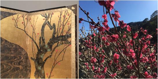 三分咲きの梅園からMOA美術館の光琳へ。熱海の梅が春を呼ぶ