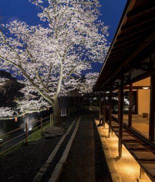 九州最大の桜ライトアップ! 壮大な日本庭園・御船山楽園で「花まつり」開催
